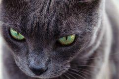 El ojo del tigre Foto de archivo libre de regalías