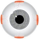 El ojo humano Foto de archivo