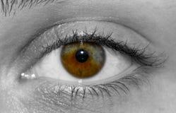 El ojo humano con heterochromia real foto de archivo libre de regalías