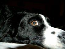 El ojo le ve el mirar de mí imagenes de archivo