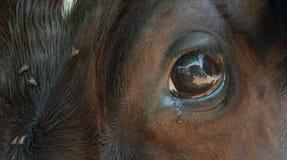 El ojo revela Foto de archivo libre de regalías