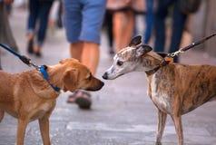 El oler de los perros Imagen de archivo libre de regalías