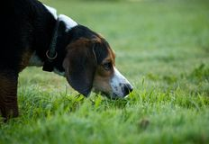 El oler del perro Imágenes de archivo libres de regalías