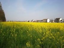 El olor de la primavera en el campo imagenes de archivo