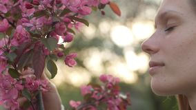 El olor de Sakura florece en jard?n de la primavera Una muchacha morena atractiva huele la cereza o la manzana rosada blanca imagen de archivo libre de regalías