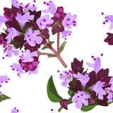 El orégano florece textura inconsútil Imagenes de archivo