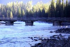 El orgullo de la mañana en el río Fotos de archivo