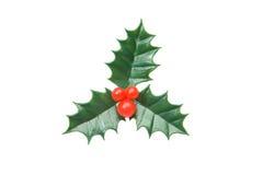 El ornamento típico del acebo de la Navidad Imagen de archivo libre de regalías