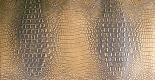 El oro/Brown oscuro grabó en relieve textura del cuero del cocodrilo Fotos de archivo libres de regalías