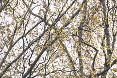 el oro del otoño coloreado se va en la luz del sol brillante - vieja mirada del vintage Imagen de archivo libre de regalías