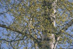 el oro del otoño coloreado se va en la luz del sol brillante - vieja mirada del vintage Foto de archivo libre de regalías