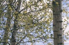 el oro del otoño coloreado se va en la luz del sol brillante - vieja mirada del vintage Foto de archivo