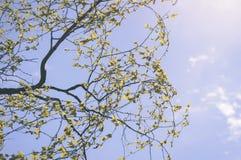 el oro del otoño coloreado se va en la luz del sol brillante - vieja mirada del vintage Fotografía de archivo