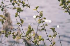 el oro del otoño coloreado se va en la luz del sol brillante - vieja mirada del vintage Imagenes de archivo