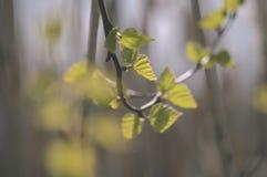 el oro del otoño coloreado se va en la luz del sol brillante - vieja mirada del vintage Fotos de archivo libres de regalías