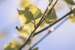 el oro del otoño coloreado se va en la luz del sol brillante - vieja mirada del vintage Fotos de archivo