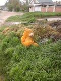 El oso Fotografía de archivo libre de regalías