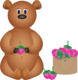 El oso come las frambuesas Imagen de archivo