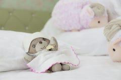 El oso de peluche tiene sueño dulce con la cuenta de ovejas Foto de archivo