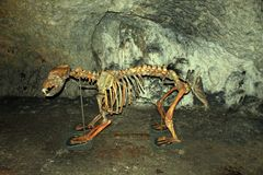 El oso esquelético fotos de archivo