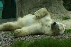 El oso polar 2 Fotografía de archivo