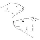 El oso polar, mano dibujada lleva, bosquejo Fotos de archivo libres de regalías
