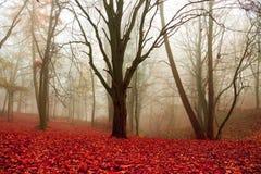El otoño, árboles en el parque, rojo, naranja deja la colocación en la tierra Imagen de archivo libre de regalías