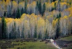 El otoño Fotos de archivo libres de regalías