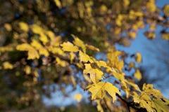 El otoño Imágenes de archivo libres de regalías
