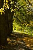 El otoño Foto de archivo libre de regalías