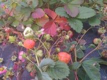 El otoño Foto de archivo