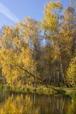El otoño, abedules acerca al agua Foto de archivo
