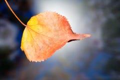 El otoño amarilleó la hoja seca del abedul en un fondo borroso Imagen de archivo