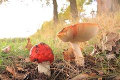 El otoño arived Foto de archivo