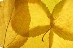 El otoño, caída deja el alambique decorativo en el estudio imagen de archivo
