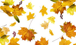 El otoño caido abajo de las hojas Imágenes de archivo libres de regalías