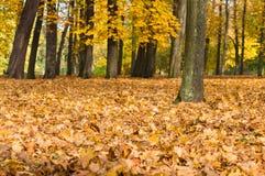 El otoño caido colorido amarillo y la naranja se va en el parque Imagen de archivo libre de regalías