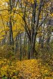 El otoño camina en parque Imagen de archivo