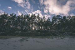 el otoño coloreó árboles en la playa - mirada retra del vintage Imágenes de archivo libres de regalías
