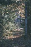 el otoño coloreó árboles en el parque - apariencia vintage Foto de archivo