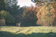 el otoño coloreó árboles en el parque - apariencia vintage Imagen de archivo libre de regalías