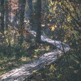 el otoño coloreó árboles en el parque - apariencia vintage Imagen de archivo