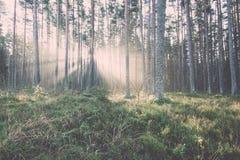 El otoño coloreó el rastro del turismo en el bosque vendimia Foto de archivo libre de regalías