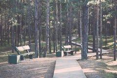 El otoño coloreó el rastro del turismo en el bosque vendimia Imagen de archivo