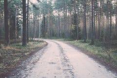 El otoño coloreó el rastro del turismo en el bosque vendimia Imágenes de archivo libres de regalías