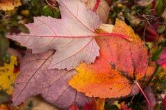 El otoño coloreó las hojas Imagen de archivo libre de regalías