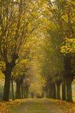 El otoño coloreó las hojas en un callejón largo fotos de archivo