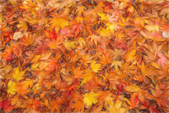 El otoño colorea bosquejo Foto de archivo libre de regalías