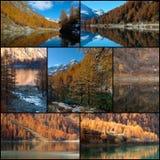 El otoño colorea el collage Imagen de archivo