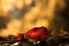 El otoño colorea el fondo Imagenes de archivo